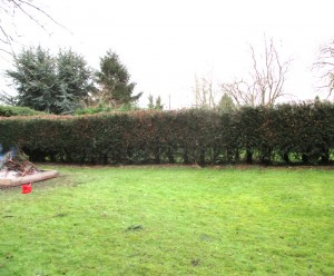 Hedge-reduction-after